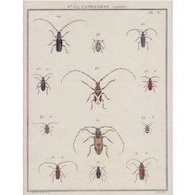 Hand Colored 18th Century French Engraving