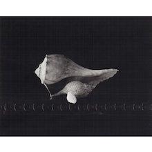 D W Mellor, Gift of Shells, 2003