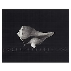 D W Mellor, Gift of Shells, 2003