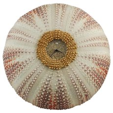 JAR Sea Urchin Clock