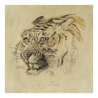 Austrian Jugendstil Animal Drawing Charcoal Watercolor Tiger Jungnickel ca. 1935