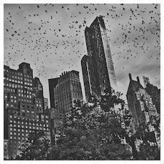 Flying, Central Park, 2015, NYC