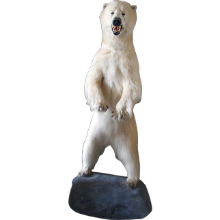 Full Size Taxidermy Polar Bear Mounted on a Rock