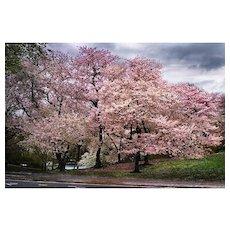 David Drebin - Pink Parkway