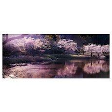 David Drebin - Pink Hour