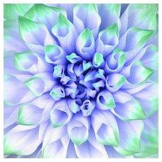 Howard Schatz - Dahlia (Formby Perfection) #2