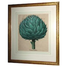 "Original Framed ""Fructus Artischochi"" Engraving by Basilius Besler"