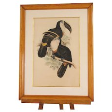 Lithograph of Toucans, Signed by Lear