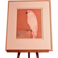 "Beth Van Hoesen (American 1926-2010) Drypoint and Aquatint ""Peaches"""