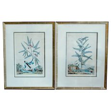 A Pair of Hand Colored Original Engravings by Abraham Munting, 17th Century