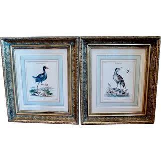 Pair of George Edwards Bird Engravings, in Fine Antique Gilt Frames