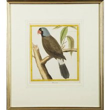 """""""Mascarin,"""" Parrot Copper Plate Engraving by François Martinet"""