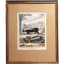 Set of Five 18th Century French Engravings of Small Mammals, (Buffon)