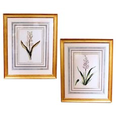 Pair of Finely Framed 18th Century German Botanicals- Hyacinths from the Hortus Nitidissimis