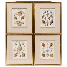 Set of Four Fine 18th Century German Engravings of Seashells by J. S. Leitner