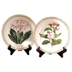 Pair of 19th Century English Botanical Porcelain Plates