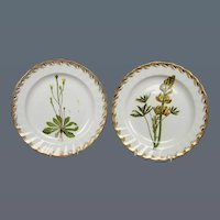 Pair of Derby Botanical Subject Plates (c. 1790 English)