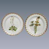 Pair of Derby Botanical Subject Plates (c. 1790 English)