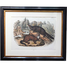JOHN JAMES AUDUBON Colored Lithograph, Mink, Plate XXXIII