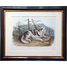 JOHN WOODHOUSE AUDUBON Colored Lithograph, Hare-Indian Dog, Plate 132