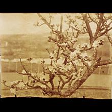 Eugène Atget — Original Photograph, Circa 1900