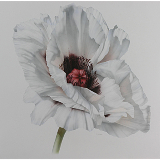 'White Poppy', by S. Bender, watercolour, signed by artist at RAMSAY