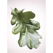 'Leaf' watercolour, signed by artist