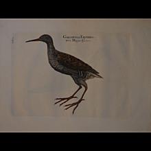 ' A series of Birds'