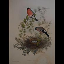 'Birds of Great Britain'