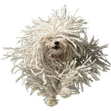 Tim Flach - Flying Mop