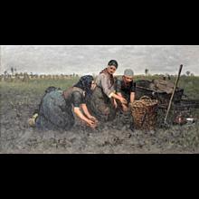 Three women digging up potatoes near Rolde