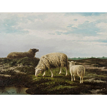 Sheep in the heath