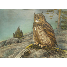 "Vintage Swedish School Chart By Nils Tirén ""Horned/Eagle Owl"""