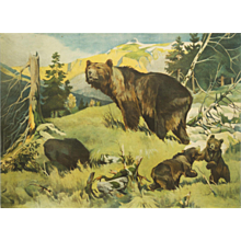"Antique School Wall Chart ""Bears"""