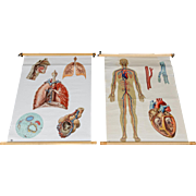 "School Teaching Map - ""Circulatory And Respiratory System"""