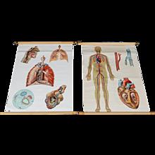 "School Teaching Map - ""Circulatory And Respiratory System"""