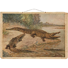 "Antique German School, Teaching Chart, Poster ""Crocodiles"""