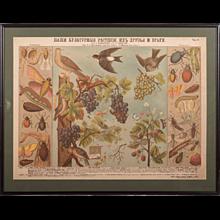 19th Century Antique German School, Teaching Chart, Poster
