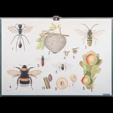 "Antique Swedish School, Teaching Chart, Poster ""Wasps"""