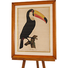 French Engraving of a Toucan After Barraband