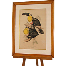 Lithograph of Toucans by Gould