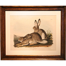 19th Century Audubon: Rocky Mountain Hare