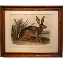 19th Century Audubon: California Hare
