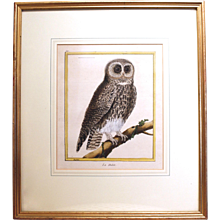 """La Hulote,"" Owl Copper Plate Engraving by François Martinet"