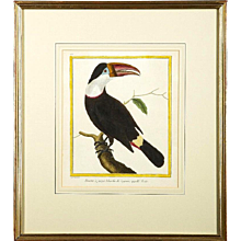 """Toucan,"" Copper Plate Engraving By François Martinet, 18th Century"