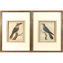 Pair of Hand Colored François Martinet Copperplate Bird Engravings