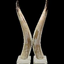 Pair Vintage Lucite Mounted Steer Horns