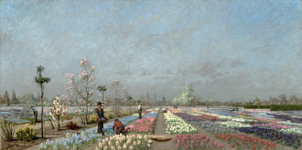 The Hyacinth Fields in Bloom at the Van Houtte Nursery, Ghent